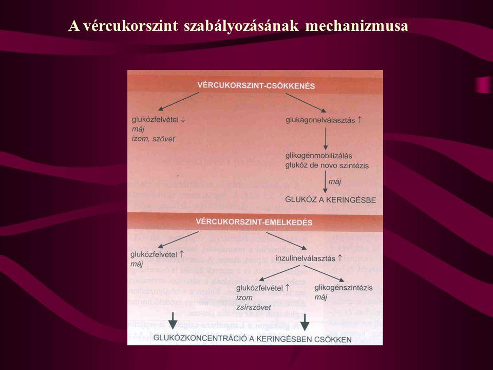A vércukorszint szabályozásának mechanizmusa