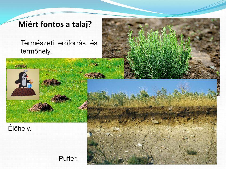 Miért fontos a talaj Természeti erőforrás és termőhely. Élőhely.