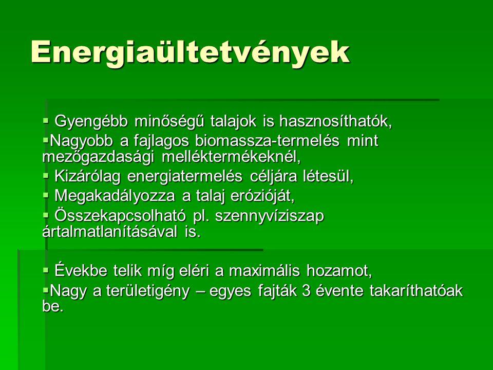 Energiaültetvények Gyengébb minőségű talajok is hasznosíthatók,