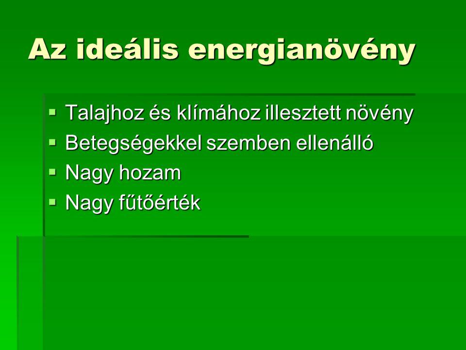 Az ideális energianövény