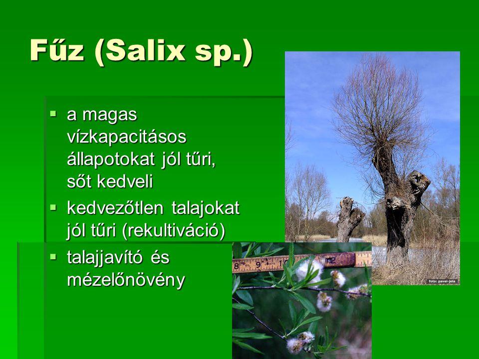 Fűz (Salix sp.) a magas vízkapacitásos állapotokat jól tűri, sőt kedveli. kedvezőtlen talajokat jól tűri (rekultiváció)
