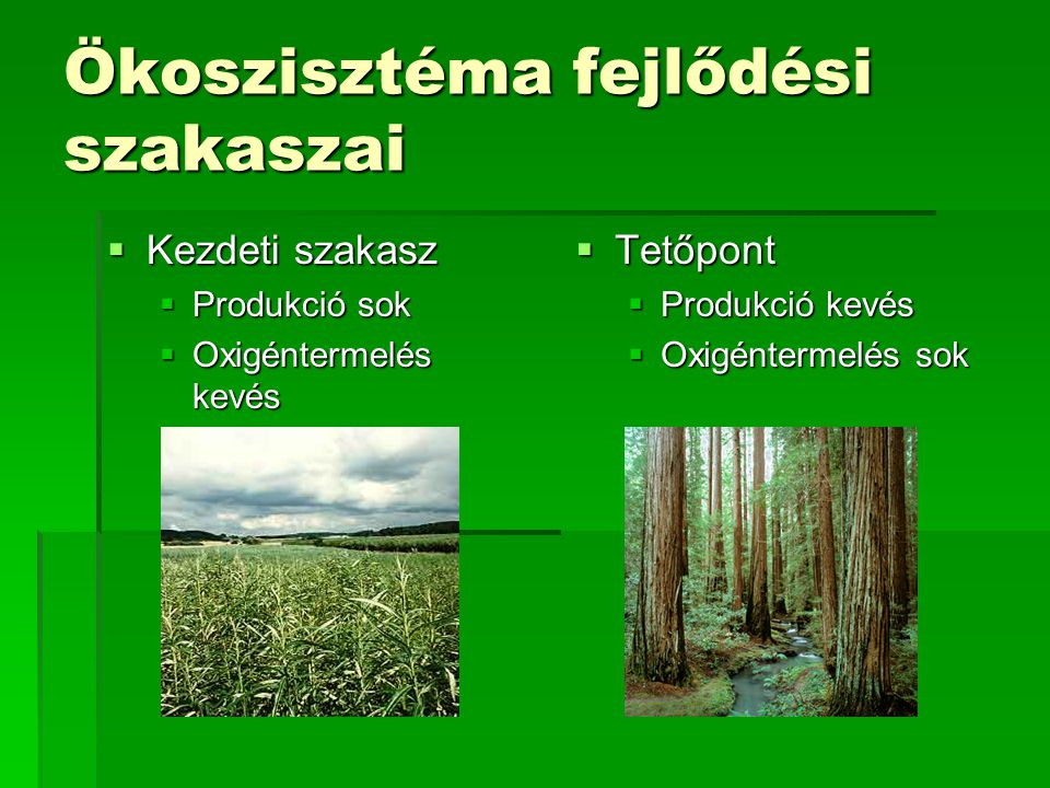 Ökoszisztéma fejlődési szakaszai