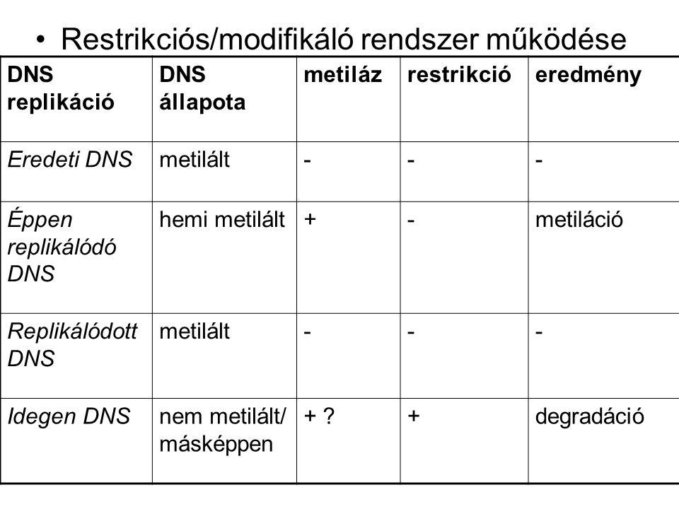 Restrikciós/modifikáló rendszer működése
