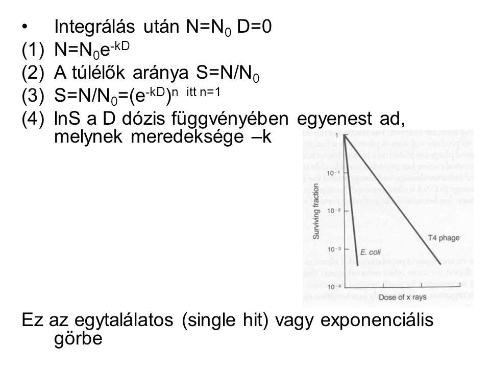 Integrálás után N=N0 D=0 N=N0e-kD. A túlélők aránya S=N/N0. S=N/N0=(e-kD)n itt n=1.