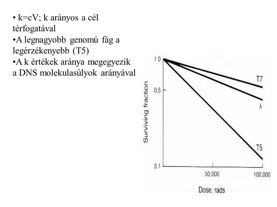 k=cV; k arányos a cél térfogatával