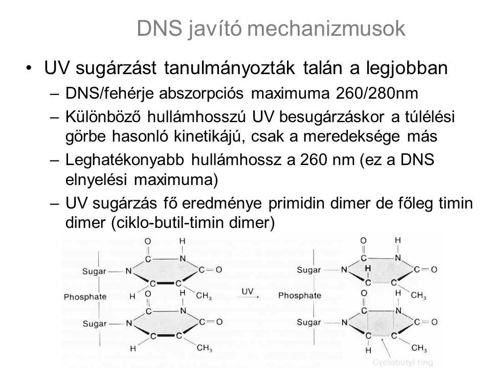 DNS javító mechanizmusok