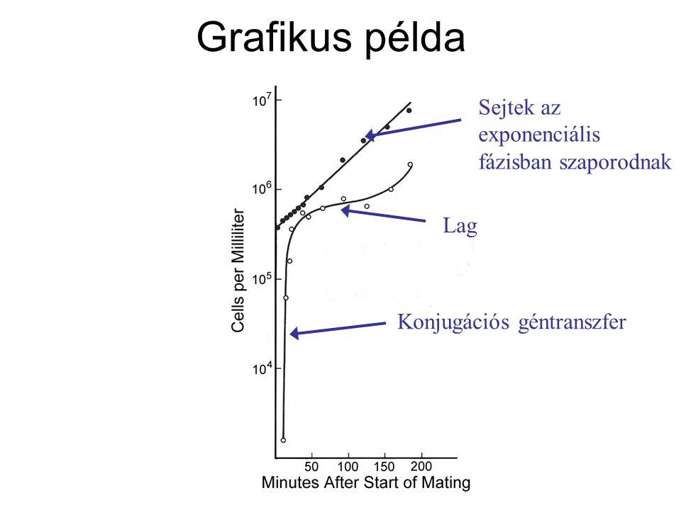 Grafikus példa Sejtek az exponenciális fázisban szaporodnak Lag