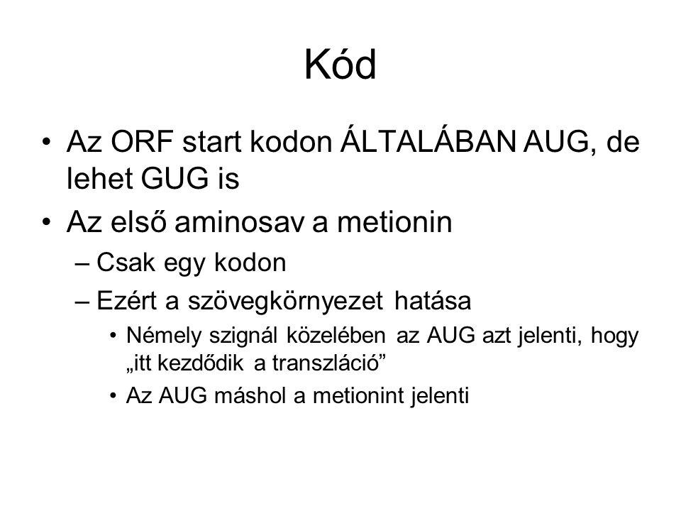 Kód Az ORF start kodon ÁLTALÁBAN AUG, de lehet GUG is