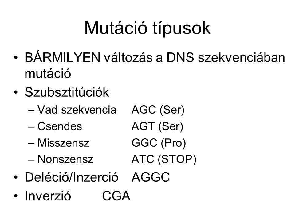 Mutáció típusok BÁRMILYEN változás a DNS szekvenciában mutáció
