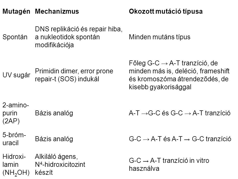 Mutagén Mechanizmus. Okozott mutáció típusa. Spontán. DNS replikáció és repair hiba, a nukleotidok spontán modifikációja.
