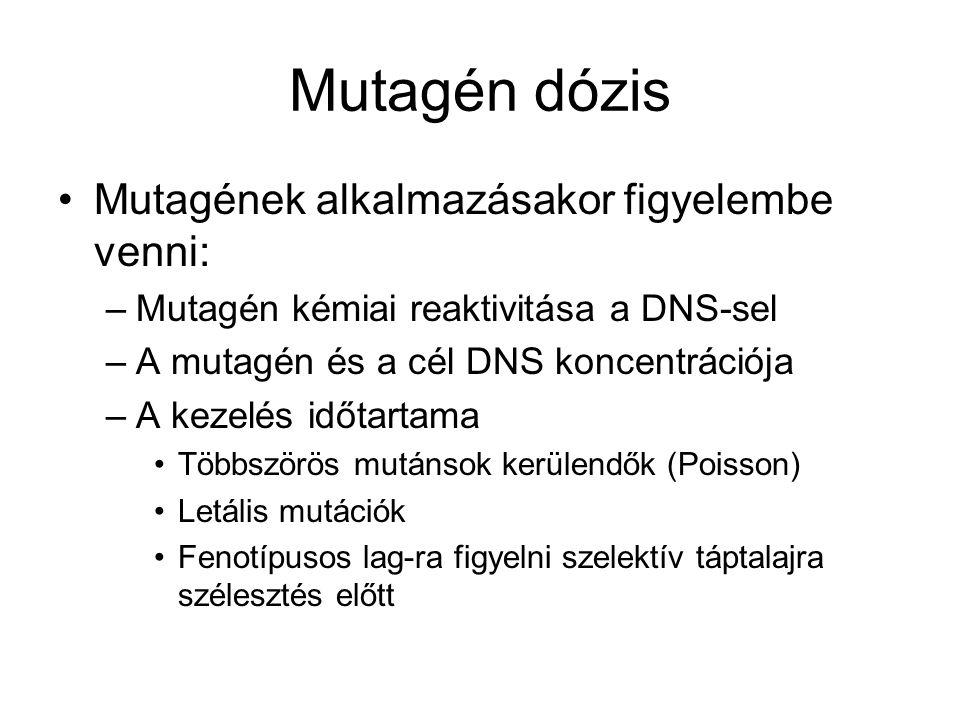 Mutagén dózis Mutagének alkalmazásakor figyelembe venni: