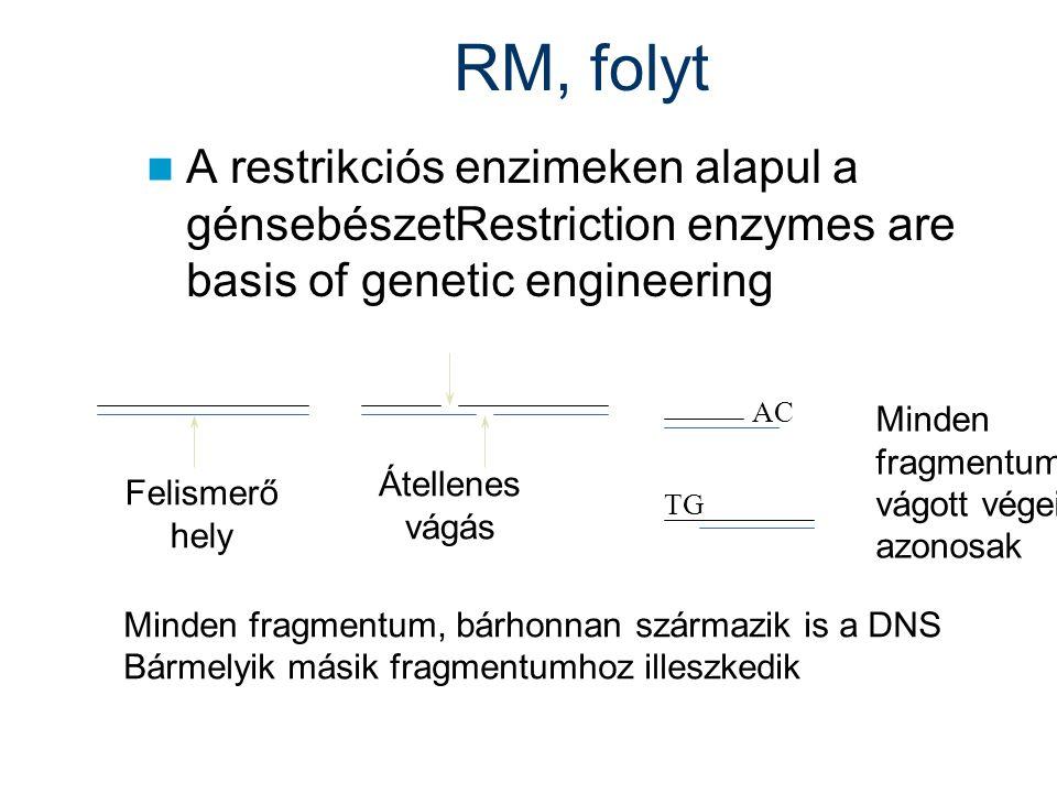 RM, folyt A restrikciós enzimeken alapul a génsebészetRestriction enzymes are basis of genetic engineering.