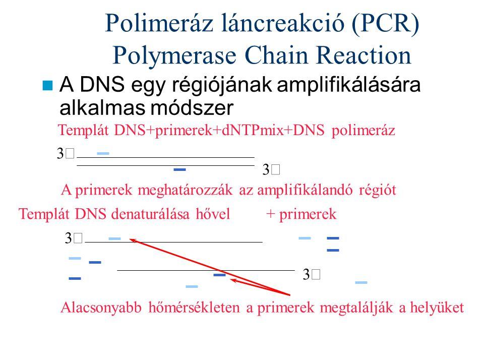 Polimeráz láncreakció (PCR) Polymerase Chain Reaction