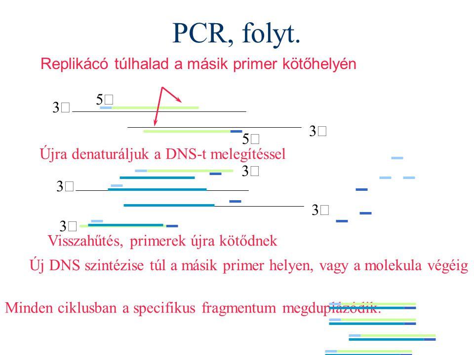 PCR, folyt. Replikácó túlhalad a másik primer kötőhelyén 5¢ 3¢