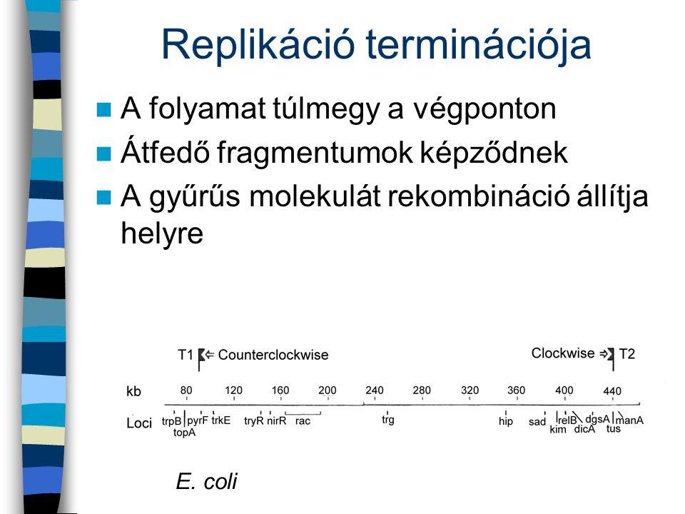 Replikáció terminációja