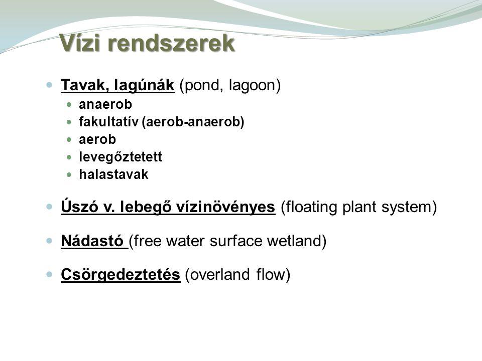 Vízi rendszerek Tavak, lagúnák (pond, lagoon)