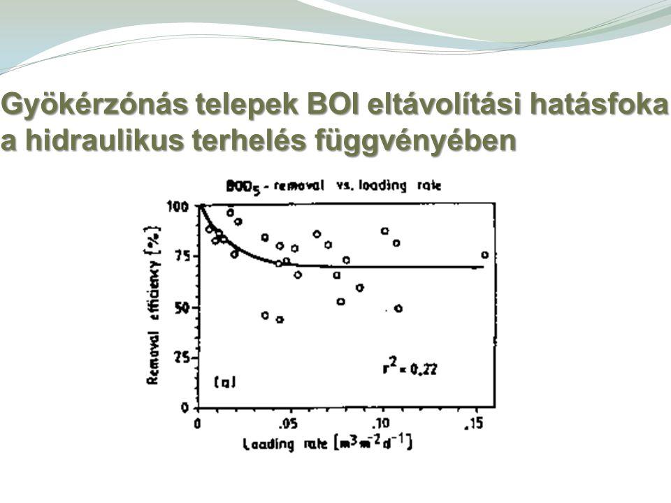 Gyökérzónás telepek BOI eltávolítási hatásfoka a hidraulikus terhelés függvényében