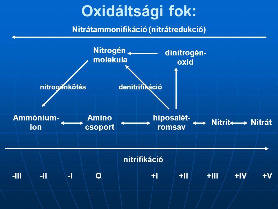 Nitrátammonifikáció (nitrátredukció)