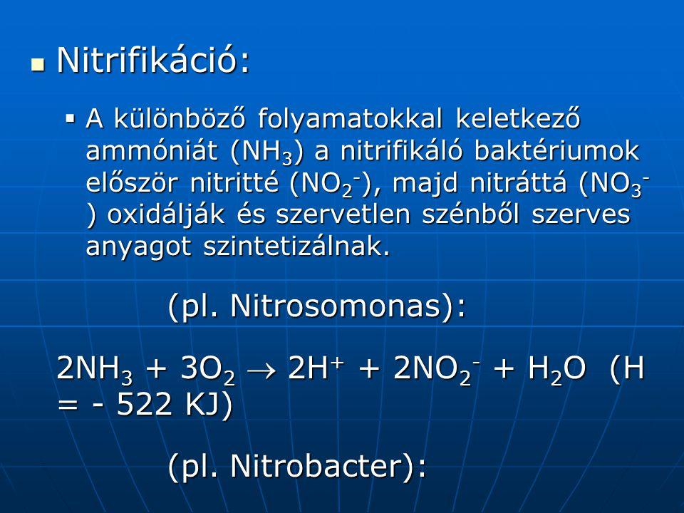Nitrifikáció: (pl. Nitrosomonas):