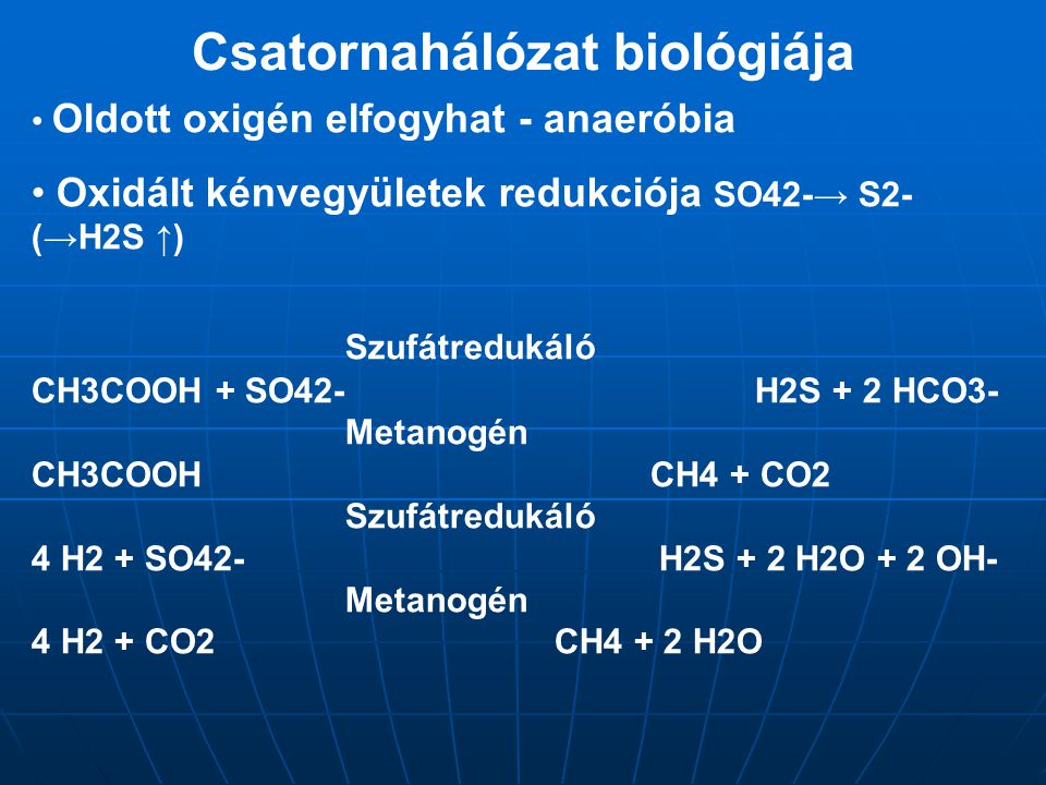 Csatornahálózat biológiája
