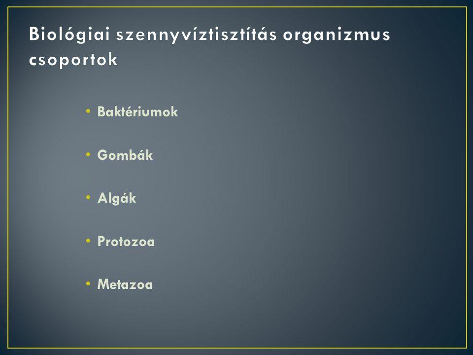 Biológiai szennyvíztisztítás organizmus csoportok