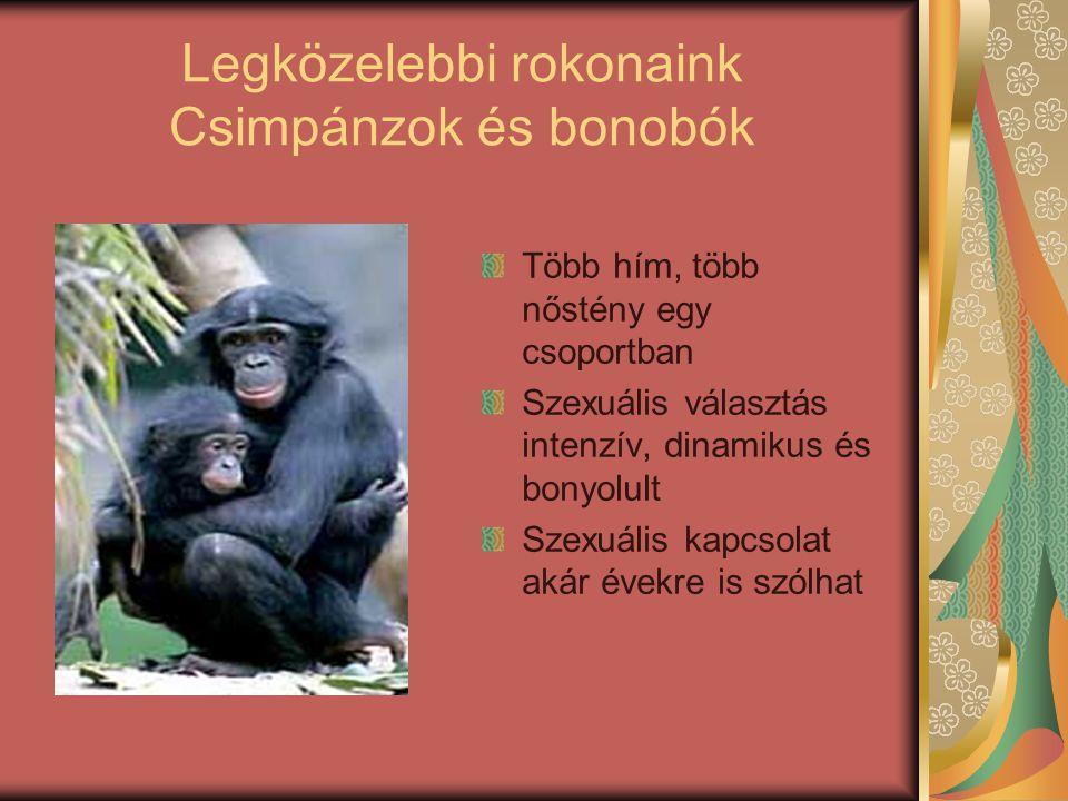 Legközelebbi rokonaink Csimpánzok és bonobók