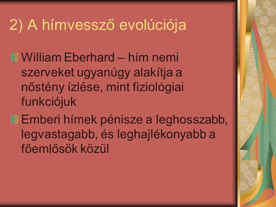 2) A hímvessző evolúciója