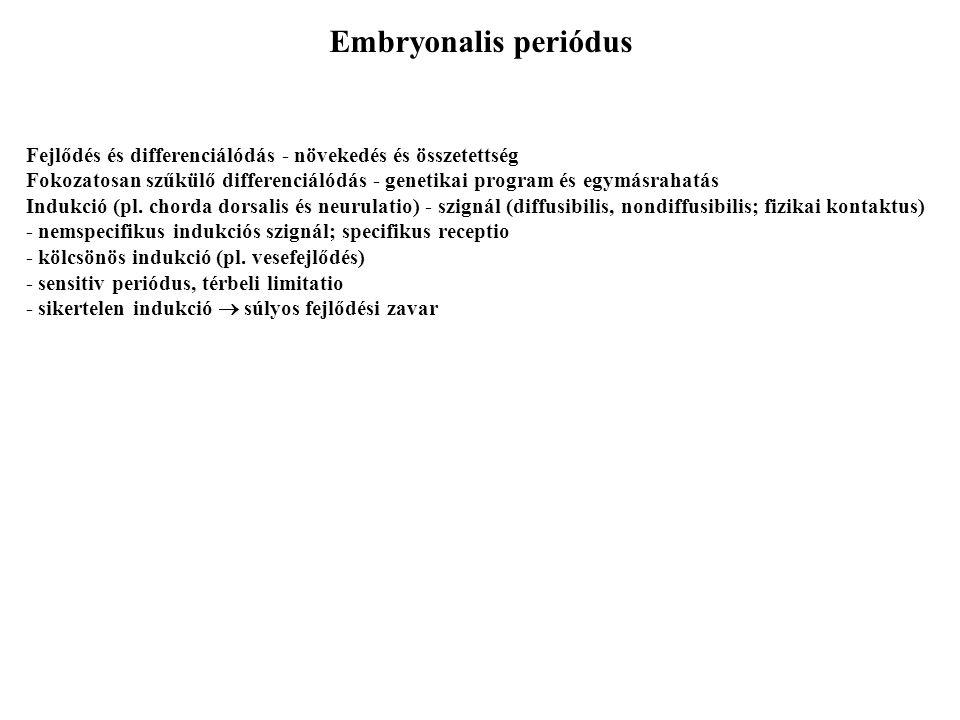 Embryonalis periódus Fejlődés és differenciálódás - növekedés és összetettség.