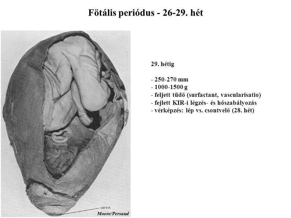 Fötális periódus - 26-29. hét