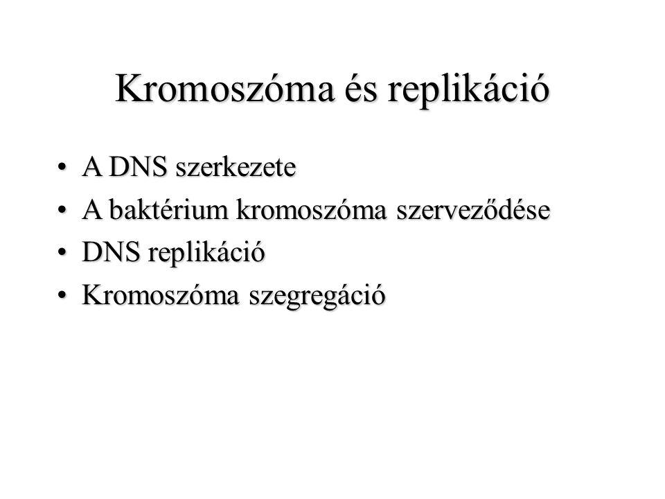 Kromoszóma és replikáció