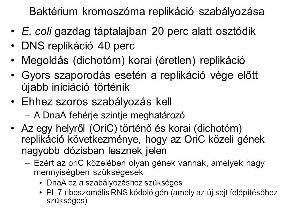 Baktérium kromoszóma replikáció szabályozása