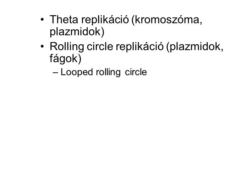Theta replikáció (kromoszóma, plazmidok)