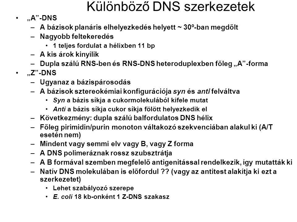 Különböző DNS szerkezetek