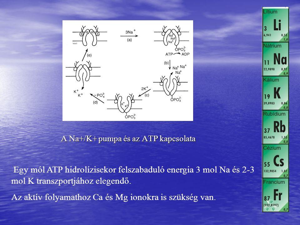 Az aktív folyamathoz Ca és Mg ionokra is szükség van.