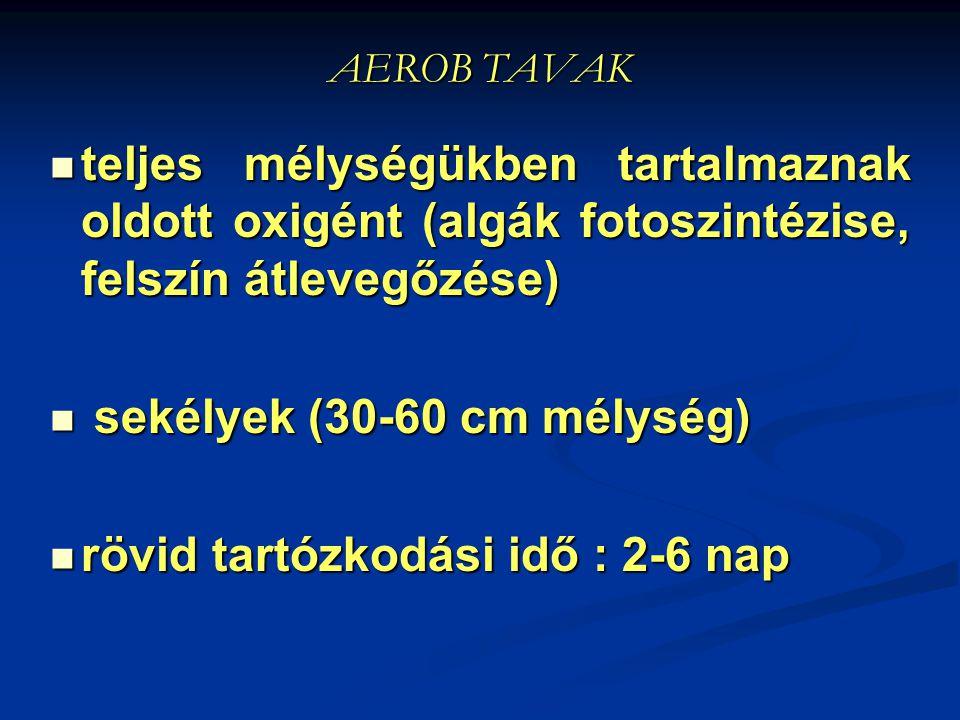 sekélyek (30-60 cm mélység) rövid tartózkodási idő : 2-6 nap