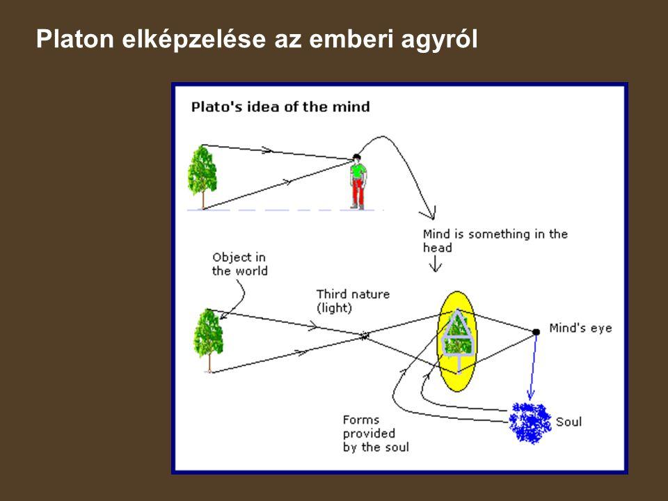 Platon elképzelése az emberi agyról