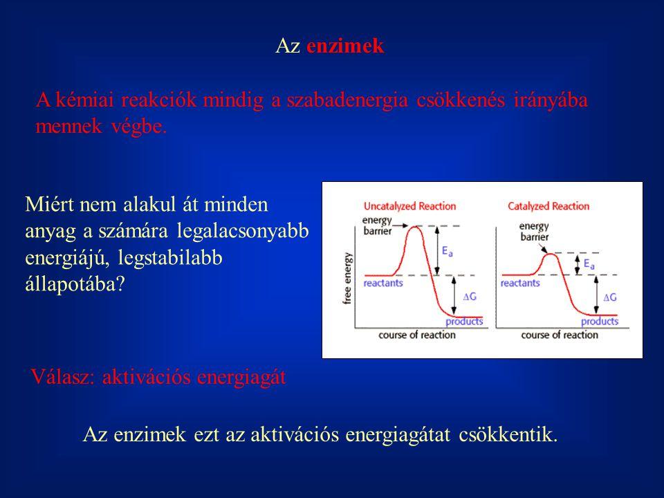 Az enzimek A kémiai reakciók mindig a szabadenergia csökkenés irányába mennek végbe.