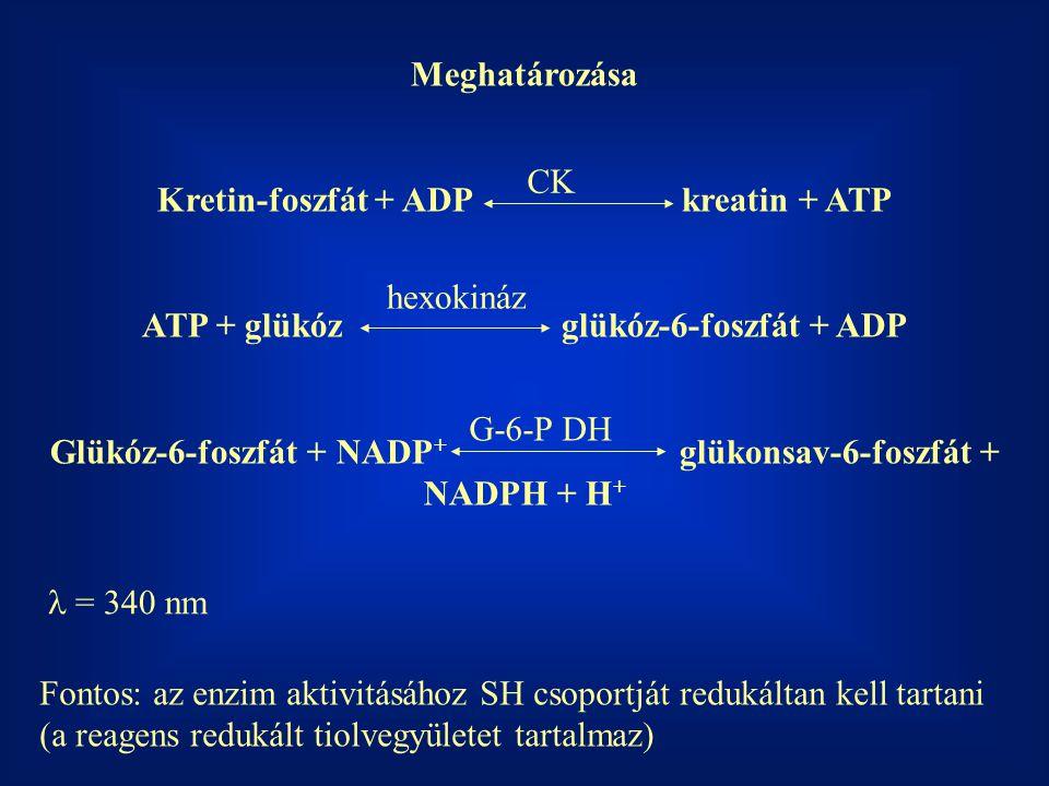 Kretin-foszfát + ADP kreatin + ATP
