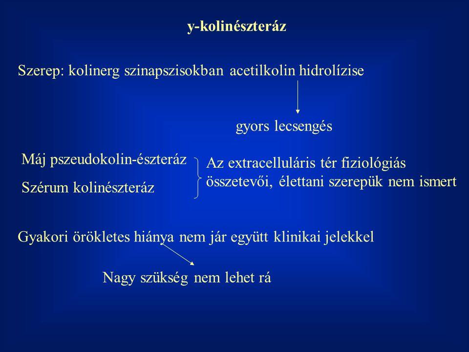 y-kolinészteráz Szerep: kolinerg szinapszisokban acetilkolin hidrolízise. gyors lecsengés. Máj pszeudokolin-észteráz.