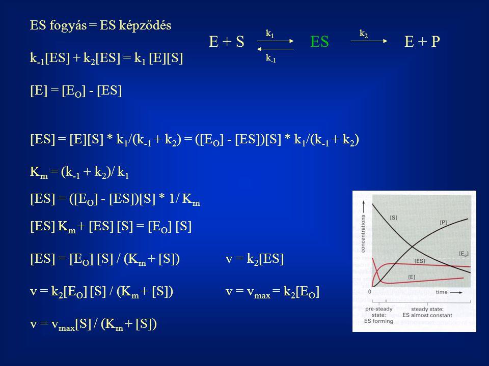 E + S ES E + P ES fogyás = ES képződés k-1ES + k2ES = k1 ES