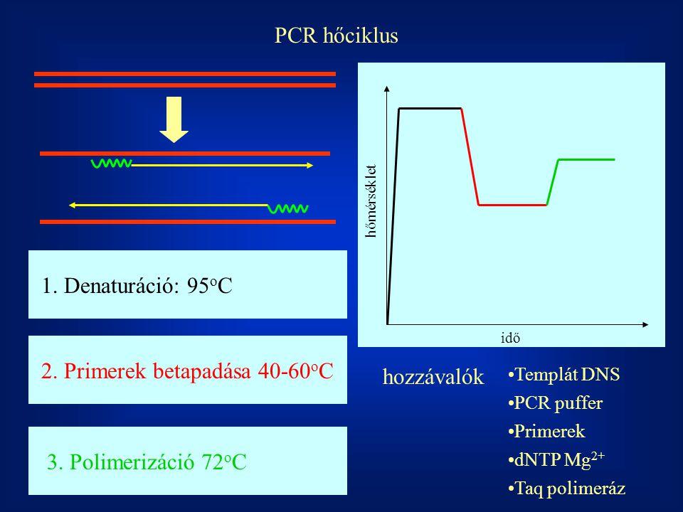 2. Primerek betapadása 40-60oC hozzávalók