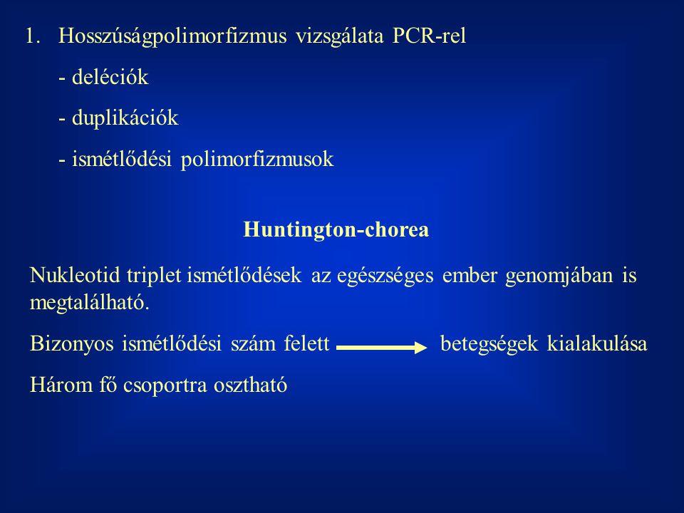 Hosszúságpolimorfizmus vizsgálata PCR-rel