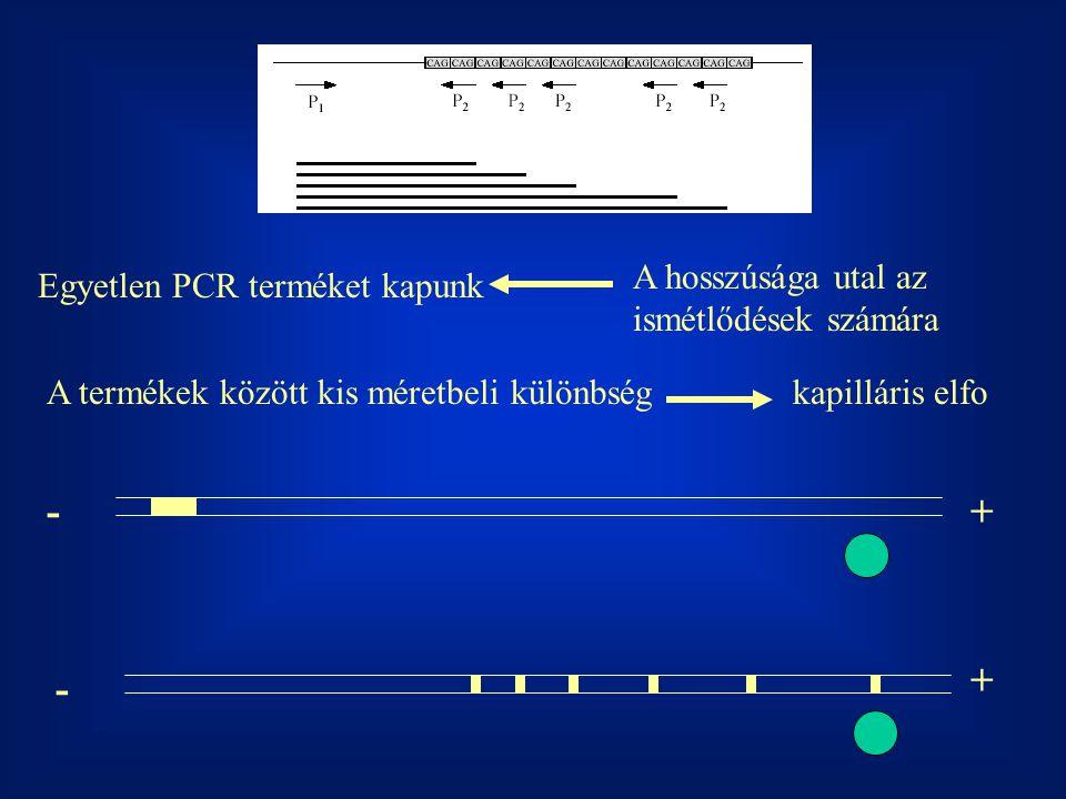 + - + - A hosszúsága utal az ismétlődések számára