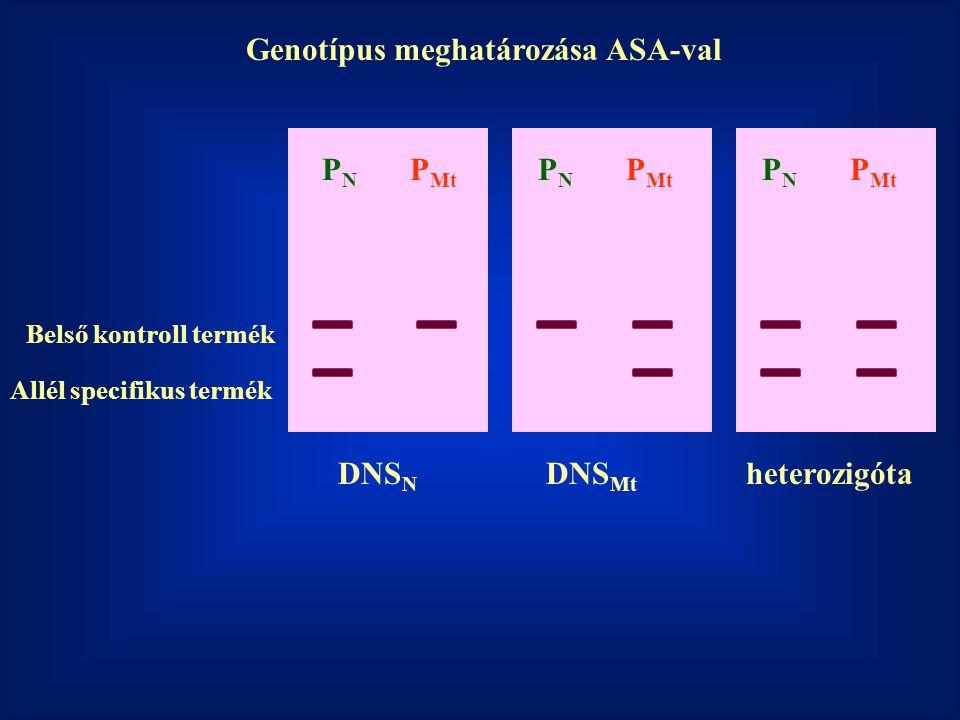 Genotípus meghatározása ASA-val
