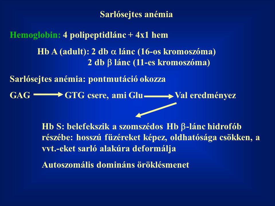 Sarlósejtes anémia Hemoglobin: 4 polipeptidlánc + 4x1 hem.