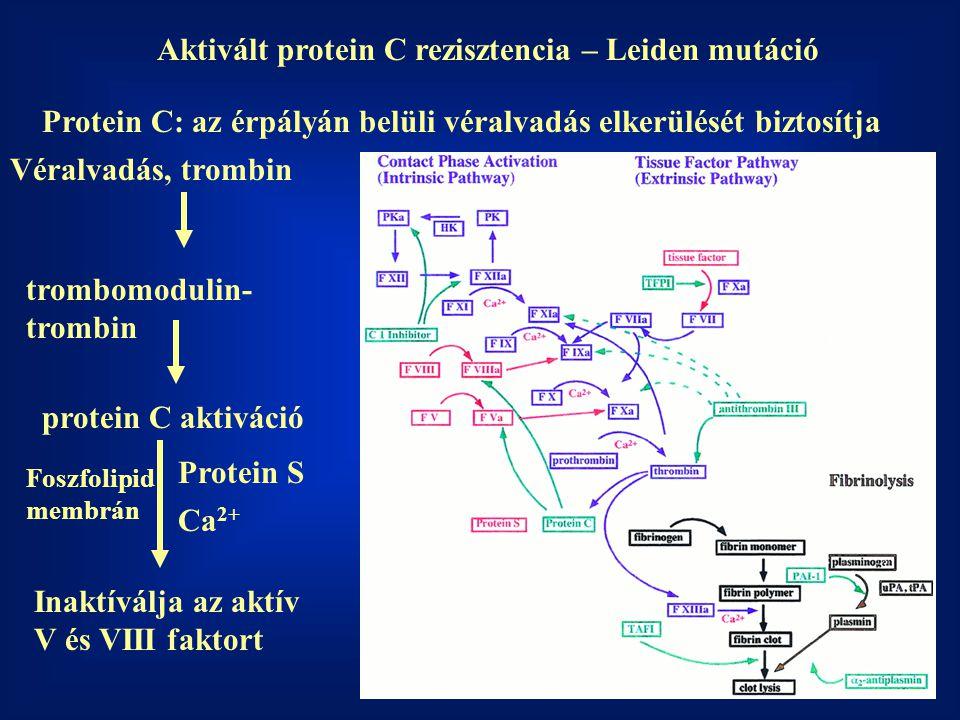 Aktivált protein C rezisztencia – Leiden mutáció