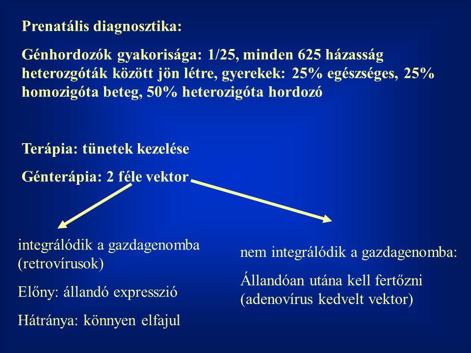 Prenatális diagnosztika: