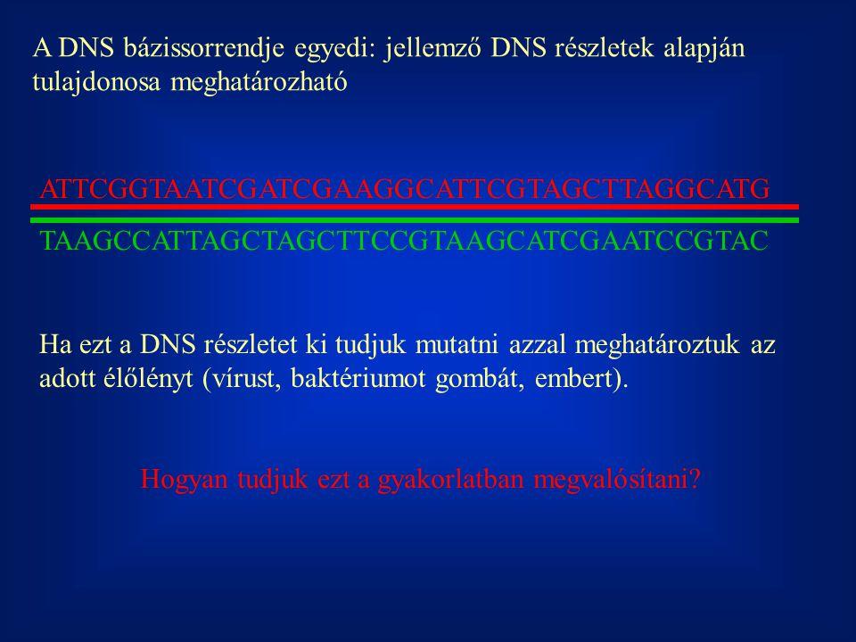 A DNS bázissorrendje egyedi: jellemző DNS részletek alapján tulajdonosa meghatározható