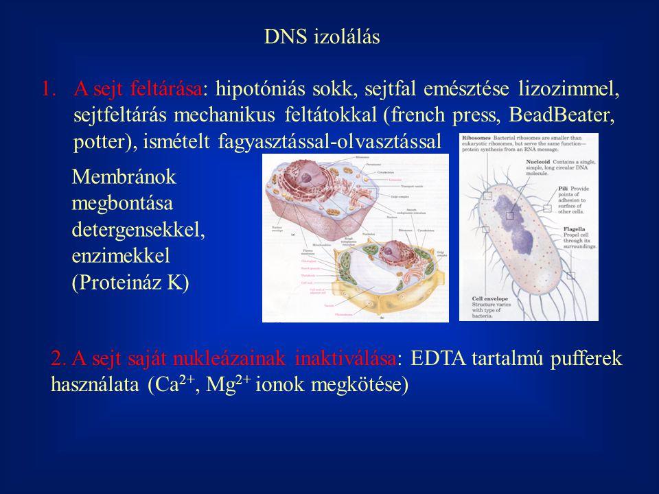 DNS izolálás