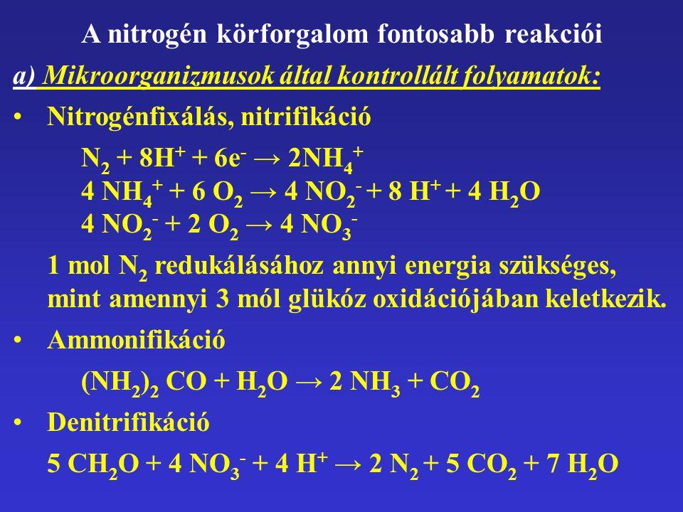 A nitrogén körforgalom fontosabb reakciói